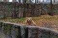 Киевский зоопарк (39).jpg