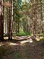Лесная дорога в Бикань - panoramio.jpg