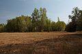 Лесок с южной стороны - panoramio (1).jpg