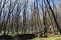 Ліс. Бабинська стінка.jpg