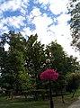 Облака над парком Шевченко 1.jpg