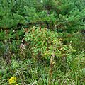Окресности Ирьяка - panoramio (2).jpg