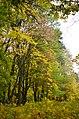 П'ятничанський парк у Вінниці. Фото 4.jpg