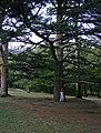 Парк - panoramio.jpg