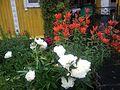 Пионы и Лилии в июле - panoramio.jpg