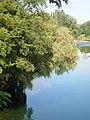 Приобаље ријеке Врбас у градском подручју 06.JPG