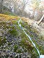 Природа - panoramio (15).jpg