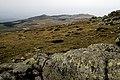 Природен парк Витоша – PP01 – Платото - No13.jpg