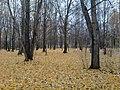 Санитарная зона, северодвинск - panoramio.jpg