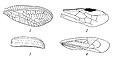 Типы крыльев насекомых.jpg
