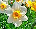 Цэцэг.jpg