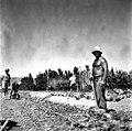 בית זרע 1939 - דוד אדלסון בעבודות הכביש - iוינטרשטייןi btm11412.jpeg