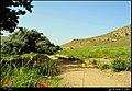 اطراف کویجه قلعه - panoramio (2).jpg