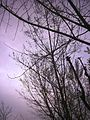 درخت و آسمان ابری.jpg