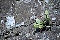 عکس از گلها و گیاهان باغ بوتانیکال تفلیس - گرجستان 50.jpg