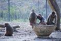 مجموعه عکس از رفتار میمون ها در باغ وحش تفلیس- گرجستان 08.jpg