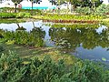 古坑服務區 Gukeng Service Area - panoramio (4).jpg