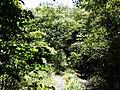 新丰科罗村-东源万绿源林场越野穿越20140628 - panoramio (2).jpg