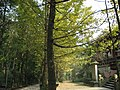 鲁班庙旁 - panoramio.jpg