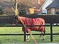 -2018-12-14 Horse, Ryder Lodge, Trimingham.JPG