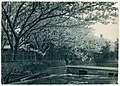 -Cherry Trees Along a Canal- MET DP136250.jpg