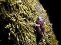 ... frog (22592064112).jpg