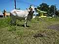 01499jfMapangpang Welcome Licaong Science City Munoz San Jose Nueva Ecijafvf 18.JPG