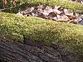 05-04-03-plagefenn-by-RalfR-35.jpg