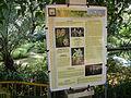 05704jfMidyear Orchid Plants Shows Quezon Cityfvf 43.JPG