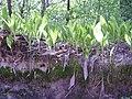 14.05.2006 - територія заказника Чернечий ліс (10).jpg