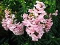 1847 - Salzburg - Mirabellgarten - Flowers.JPG
