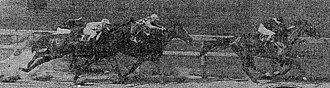 Brighton Handicap - Peter Pan (2nd from left) making his stretch run to win the 1907 Brighton Handicap