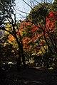 191123 Settsu-kyo Gorge Takatsuki Osaka pref Japan04s5.jpg