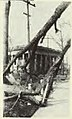 1920 Palm Sunday tornado damage at Wilmette Village Hall.jpg