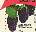 1954 catalog of hardy Ozark Mountain grown nursery stock at amazingly low prices direct from grower to planter (1954) (16483239620).jpg