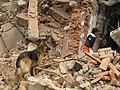 2008년 중앙119구조단 중국 쓰촨성 대지진 국제 출동(四川省 大地震, 사천성 대지진) IMG 5980.JPG