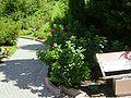 2008 07 Botanical Garden Meran 70820R0242.jpg