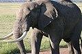 20090505-TZ-NGO Safari 073 (4672227119).jpg