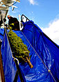2009 Christmas Tree Ship DVIDS1093717.jpg