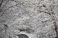 2011 snow february4 (5430877426).jpg