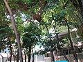 2013-08-06 05-42-28 Wikimania.jpg