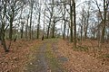 2013-12-23 — Dingspelerberg – Dijkerhoek (Markelo, Hof van Twente) - 04.jpg