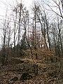 20130331Carpinus betulus1.jpg
