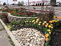2014-04-21 12 32 40 Tulips and other flowers in Elko, Nevada.JPG