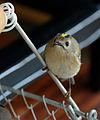 2014-10-30 09-11-05 oiseau.jpg