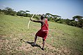 2015-06-15 Maasai guide shoots a traditional hunting bow and arrow during a walking safari, Ol Kinyei Conservancy in the Maasai Mara, Kenya 0042.jpg