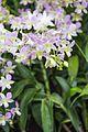 2016 Singapur, Ogrody botaniczne (260).jpg