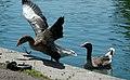 2017-07-04 14-01-34 oiseaux.jpg