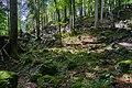 20170820 Bergwald im unteren Landtal, Hagengebirge (00742).jpg