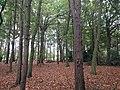 2017 Voorhout - Overbosch - Doorkijkje door de bomen.jpg